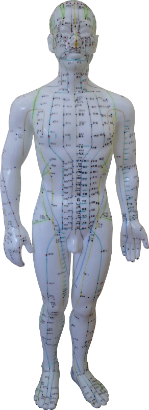 Acupuncture_Doll_292x800